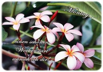 Montag für schöne guten morgen bilder Guten Morgen
